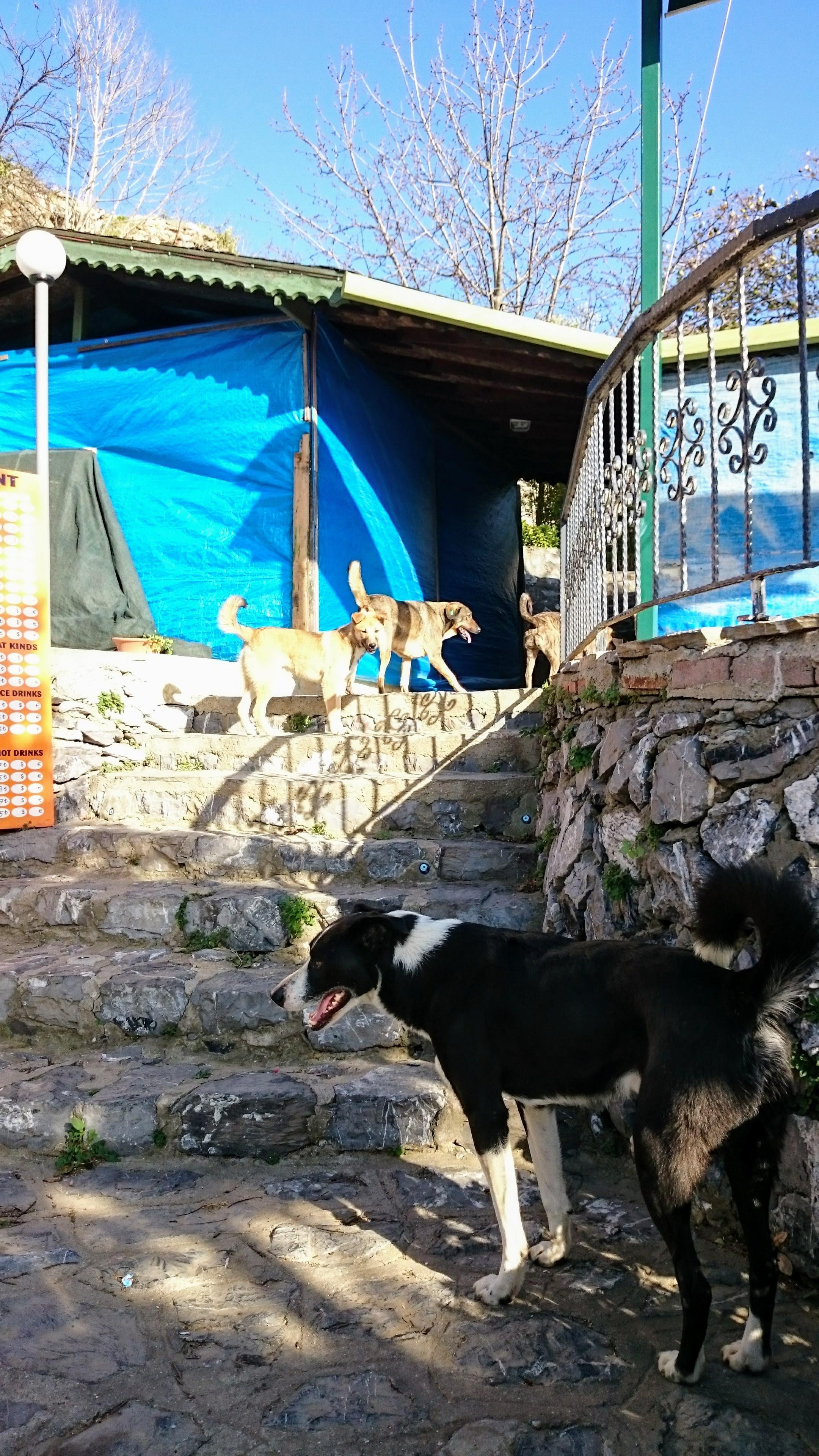 Cestou ke strážnímu hradu nás doprovázela smečka psů