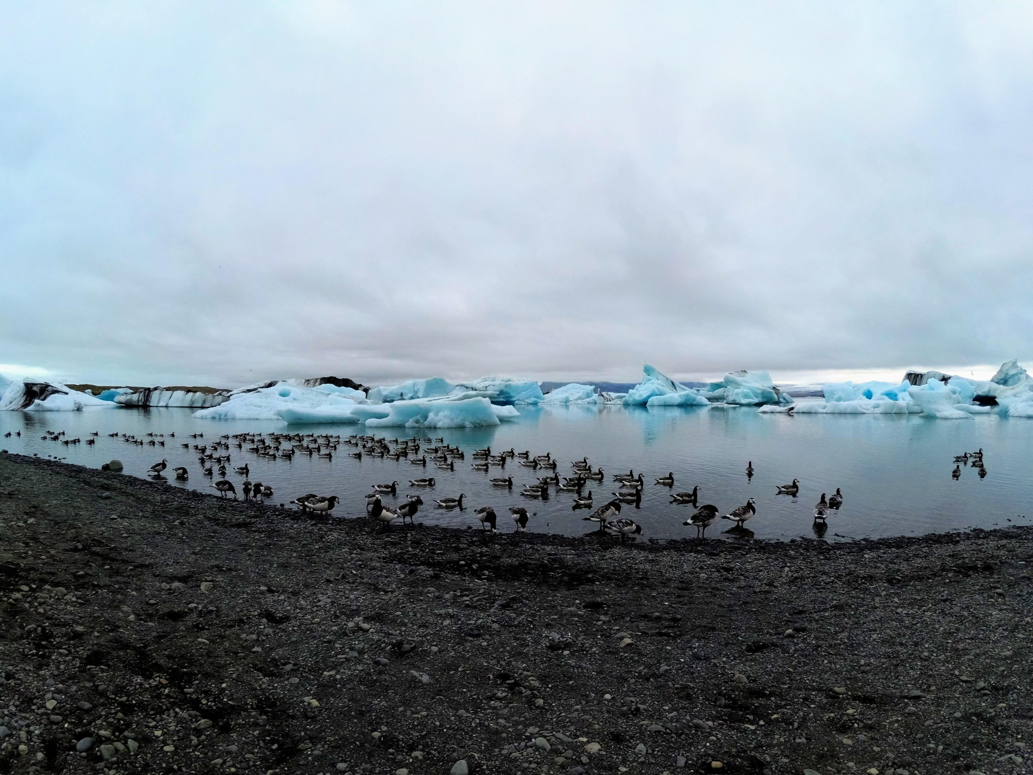 Migrace ptactva v ledovcové laguně