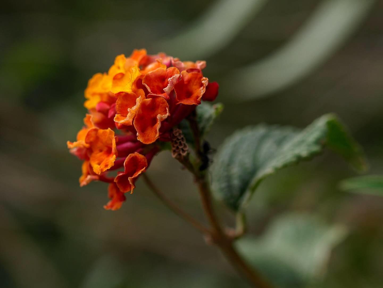 Drobná květina
