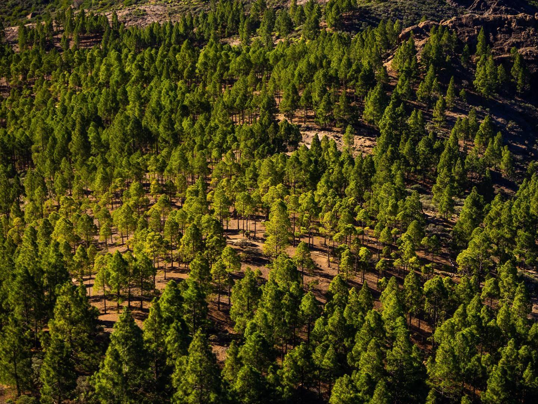 Výhled na lesy ze skály Roque Nublo