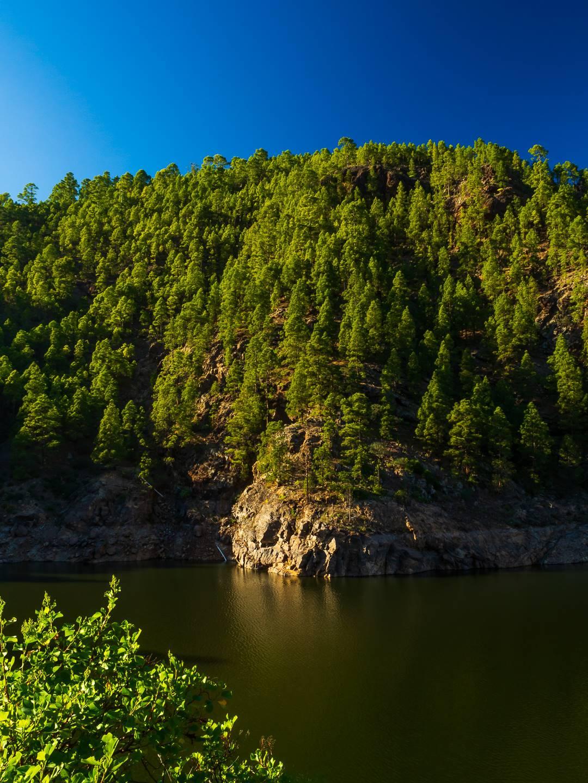 Les nad přehradou