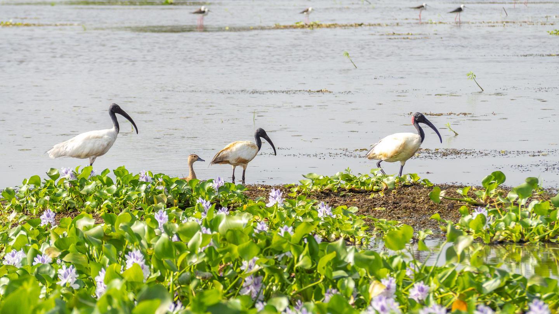 Srí Lanka – Jižní pobřeží a rezervace Kalametiya (4)