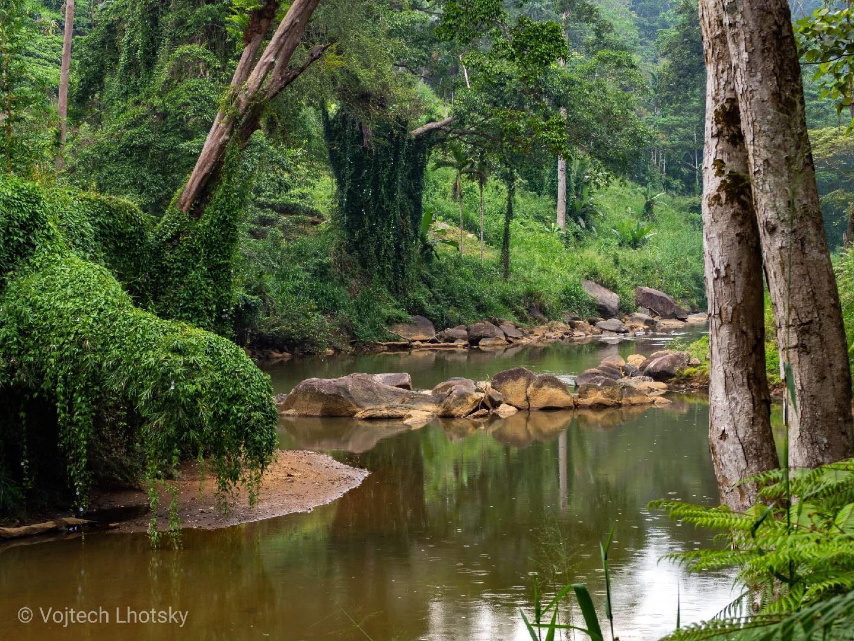 Deštný les Sinharaja