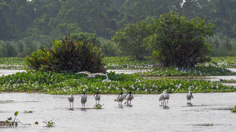 Ptačí rezervace Kalametiya