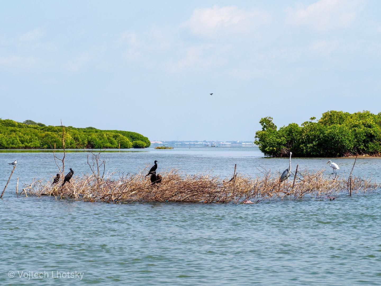 Ptactvo v laguně
