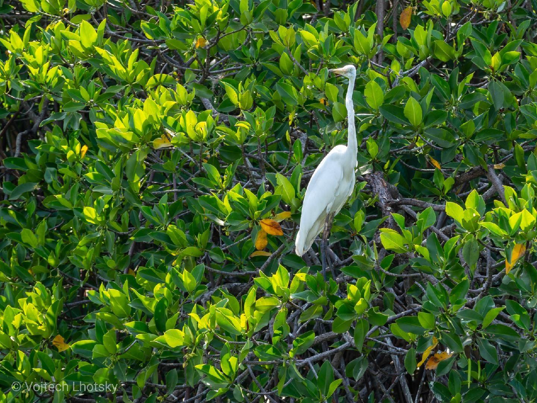 Ptactvo mezi mangrovy