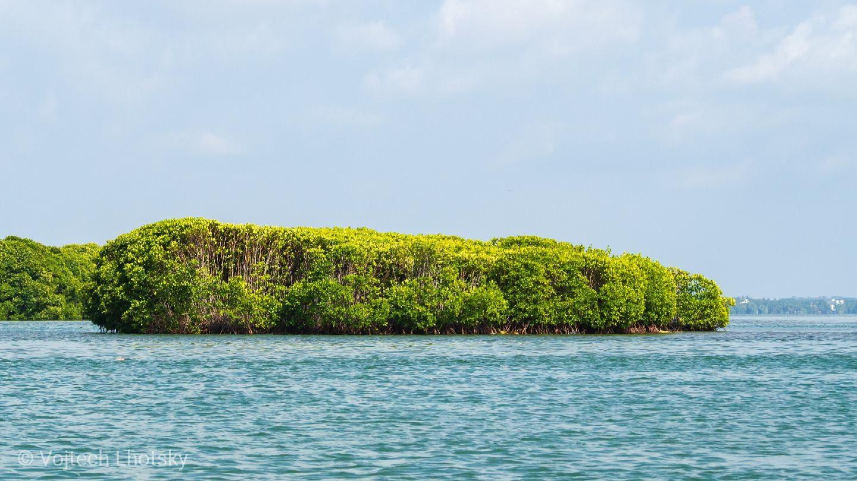 Mangrovový porost v laguně