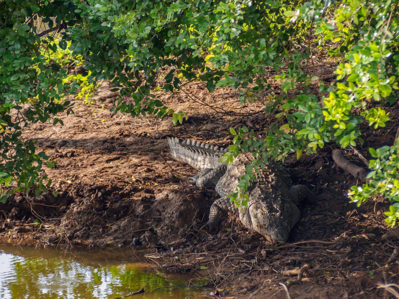 Po celém parku jsme potkávali krokodýly