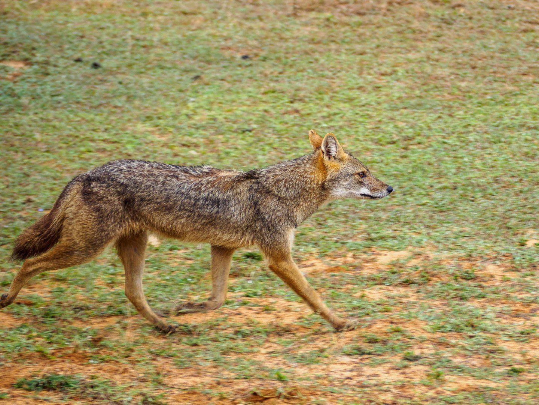 Srí Lanka – Národní park Yala (5)