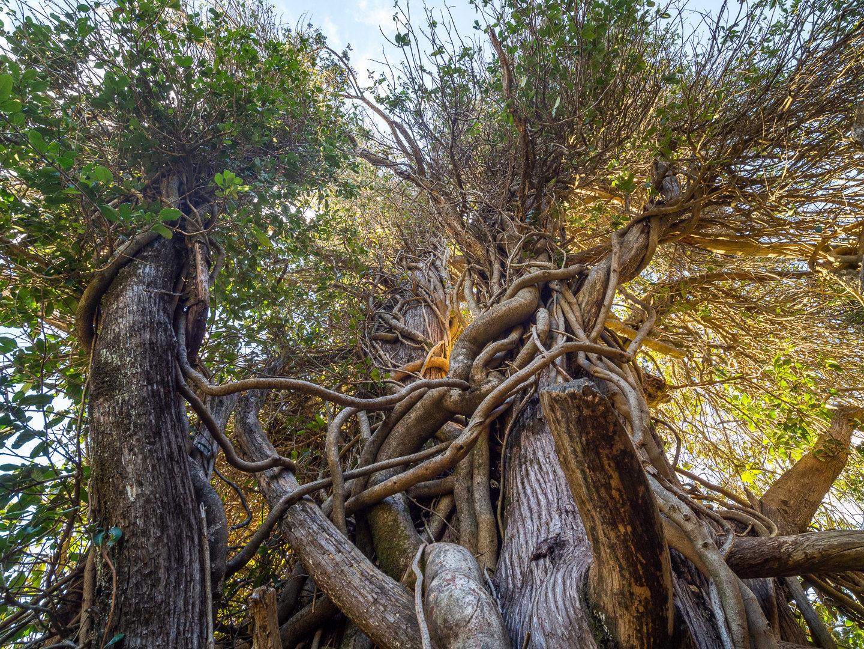 Nádherné stromy v NP Laguna del Laja
