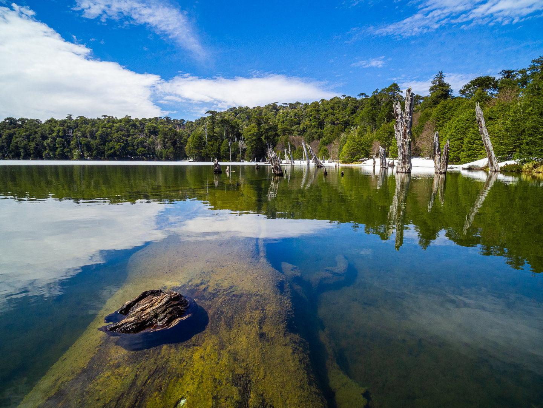 Lago Captrén, NP Conguillío