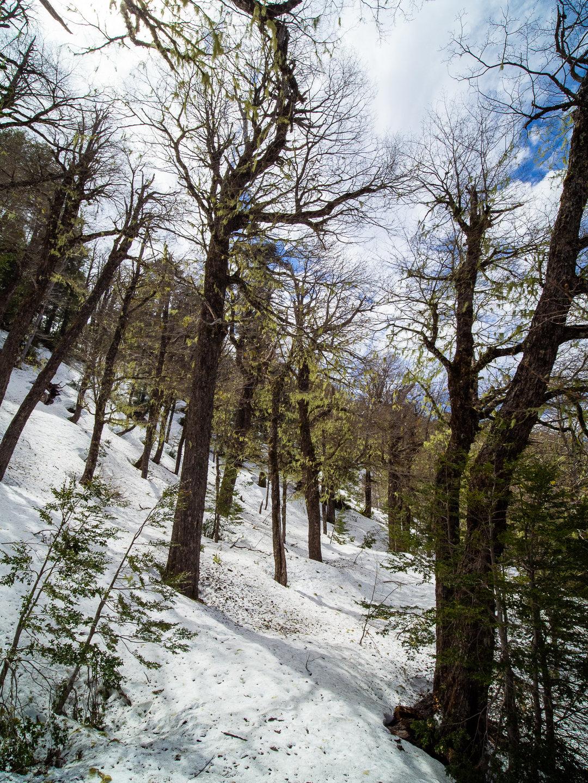Národní park Conguillío je v říjnu stále pod sněhem