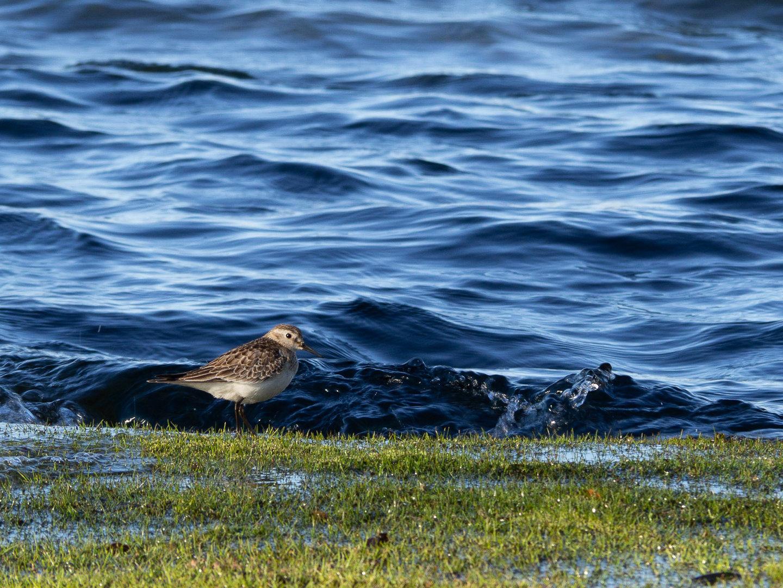 Ptáček u jezera Icalma