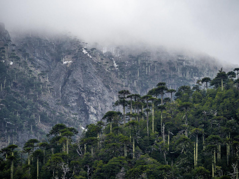 Fotografie ze Středního Chile