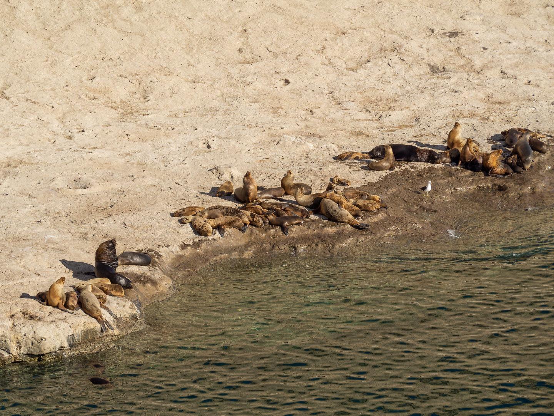 Kolonie lachtanů na poloostrově Valdés