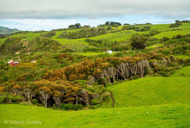 Zelená krajina na ostrově Chiloé