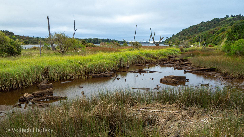 Řeka Chepu a pozůstatky bývalého lesa