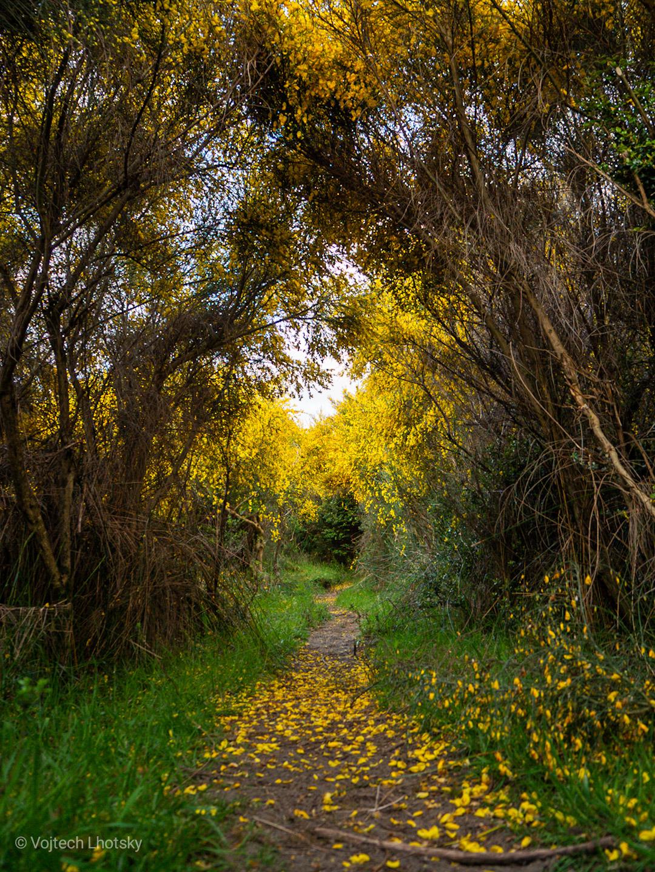 Stezka pokrytá květy v NP Chiloé