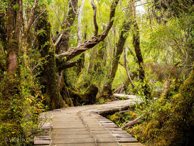 Stezka v NP Chiloé