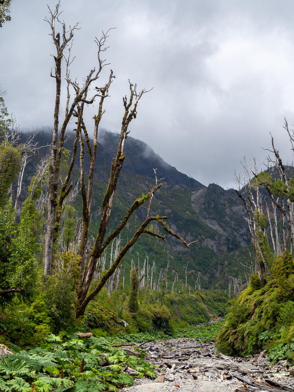 Národní park Pumalín