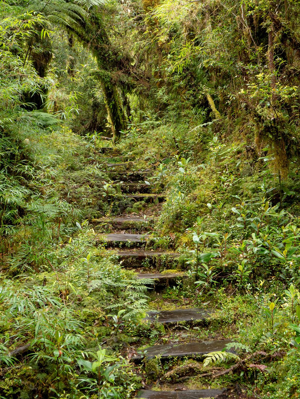 Stezka deštným lesem, NP Pumalín