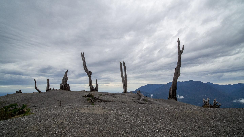 Pozůstatky stromů spálených erupcí vulkánu Chaitén