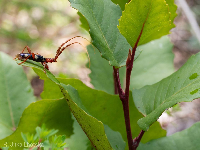 Hmyz v NP Los Alerces