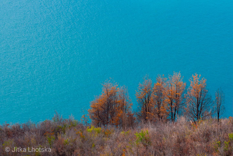 Kontrast stromů s tyrkysovou barvou jezera General Carrera