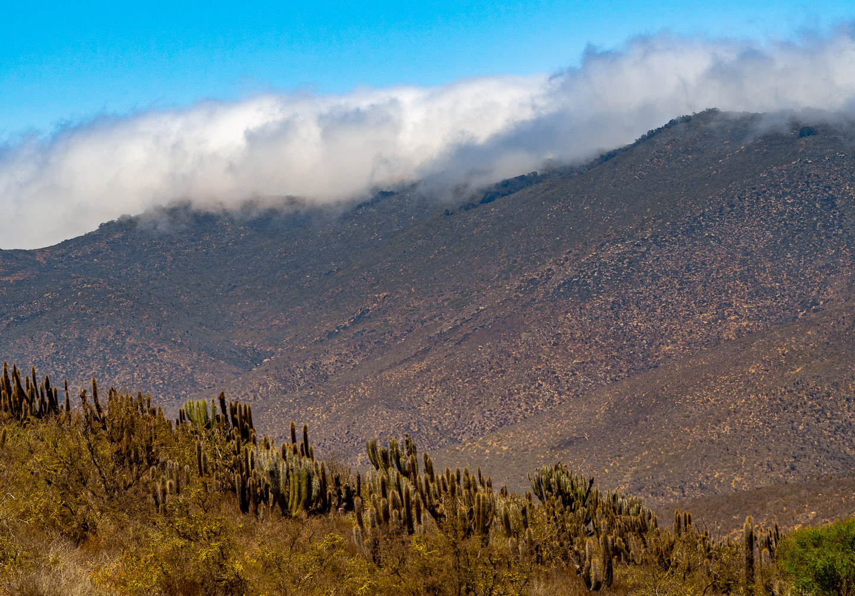 Mlha se opírá o horský hřeben (NP Fray Jorge)