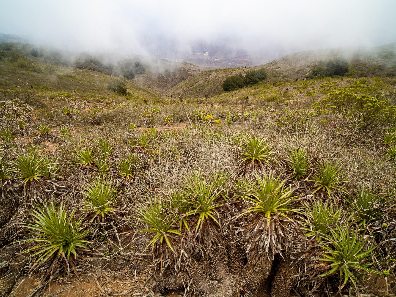 Národní park Fray Jorge