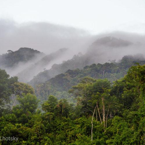 Mlha se valí přes amazonský prales