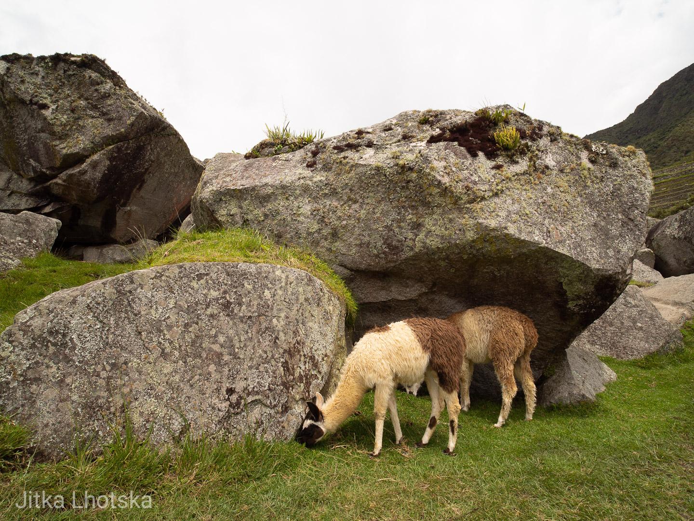 Lamy se pasou na Machu Picchu