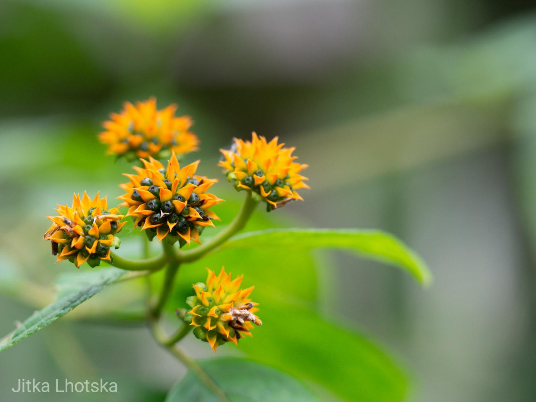 Flóra v amazonii
