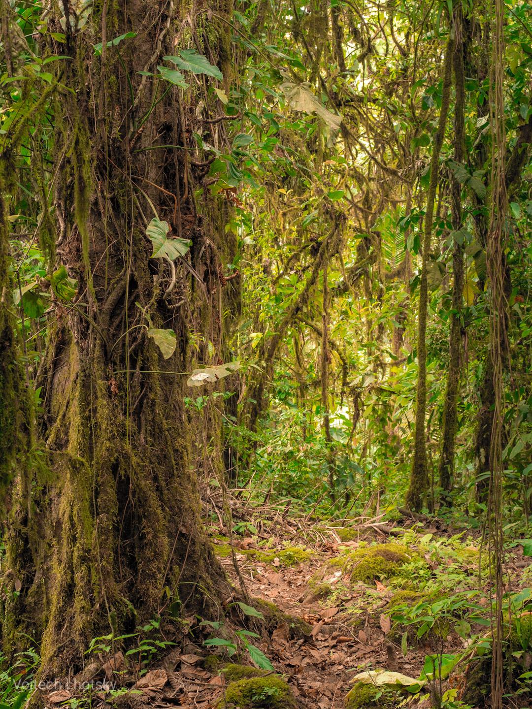 Deštný les na pobřeží Ekvádoru