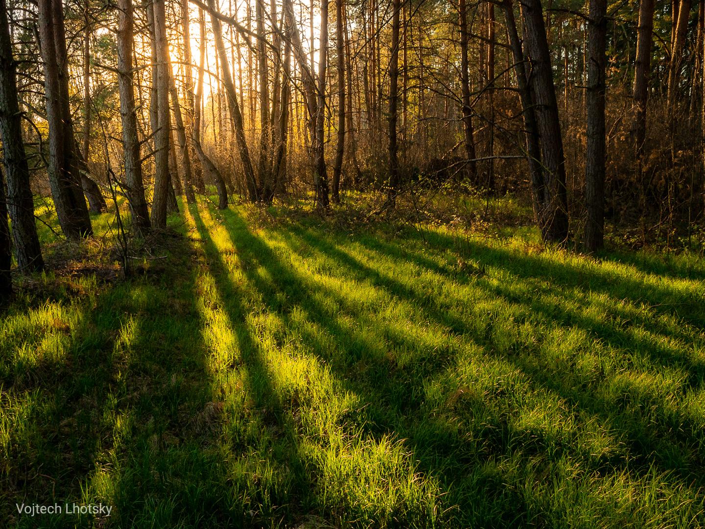 Lesy na Třeboňsku