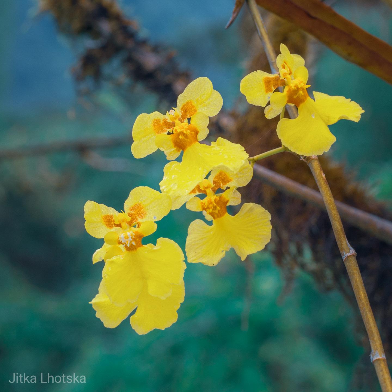 Květiny v národním parku Machalilla