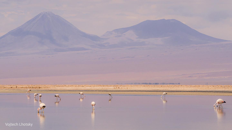 Plameňáci v laguně Chaxa