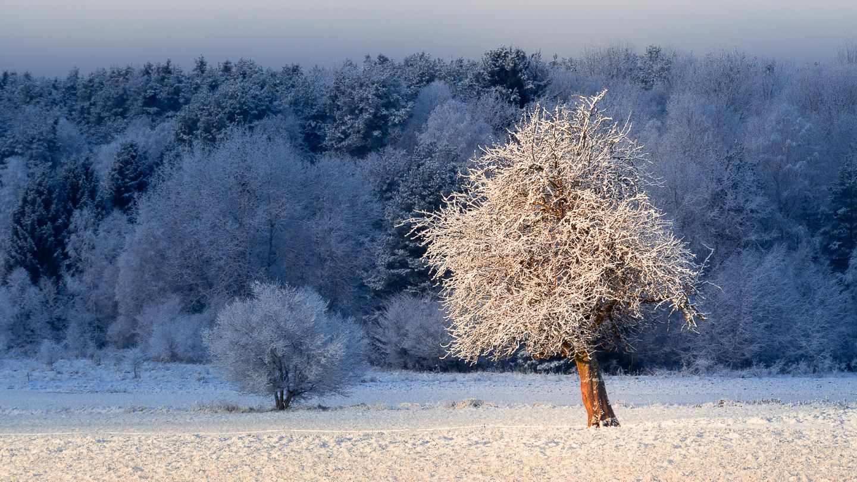Zima na Třeboňsku