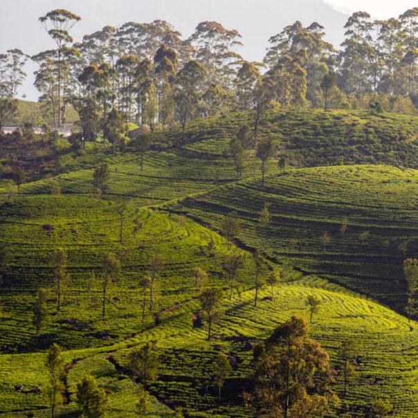 Srí Lanka - březen 2019